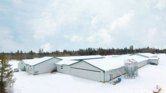 Poultry Laying Barn